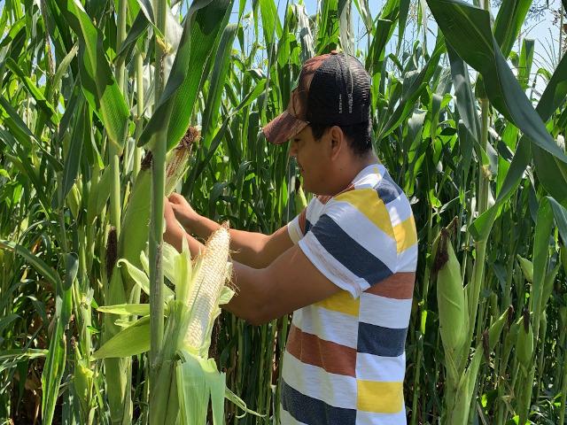demostracion agricola